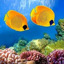 Корпоративный сайт компании Aquarium Classic