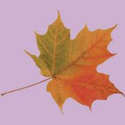 Осенний редизайн сайта white-media.ru
